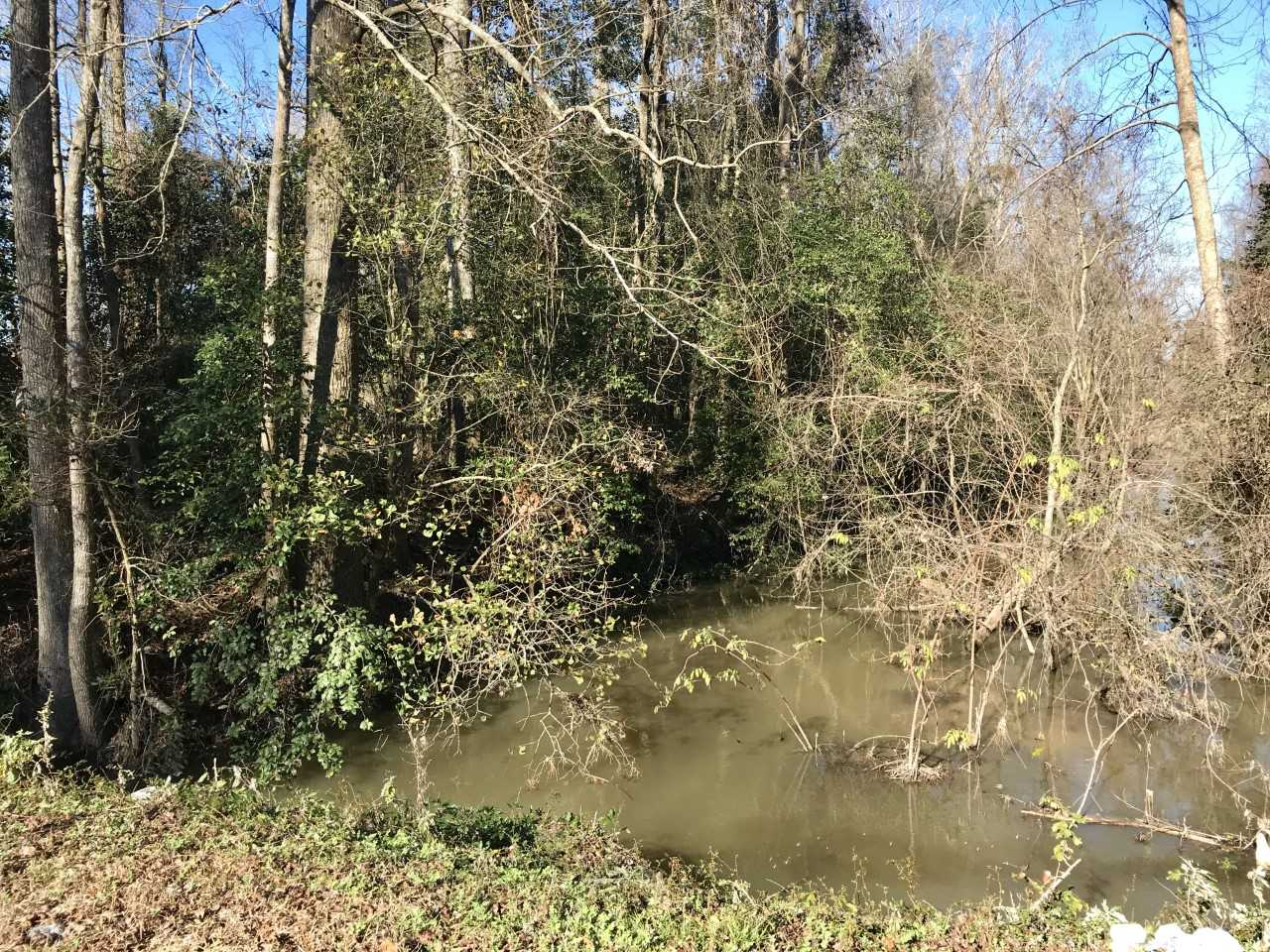 The swamp where Lauren was found dead (Photo: Russ Bowen)