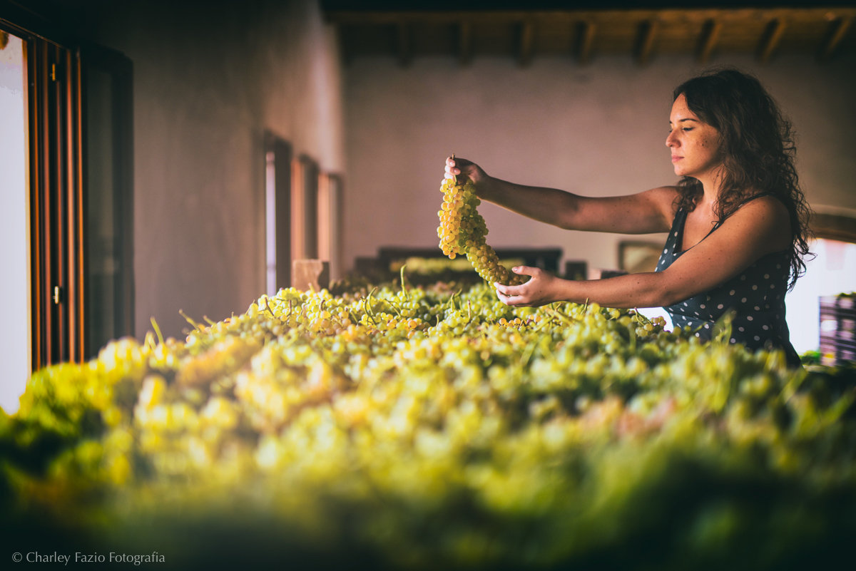 Summer of Soave