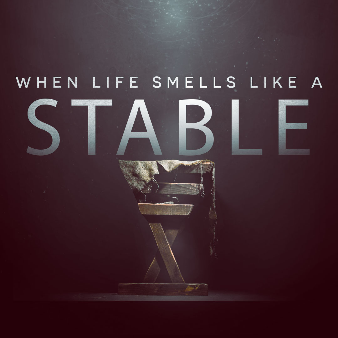 When-Life-Smells-Like-A-Stable.jpg