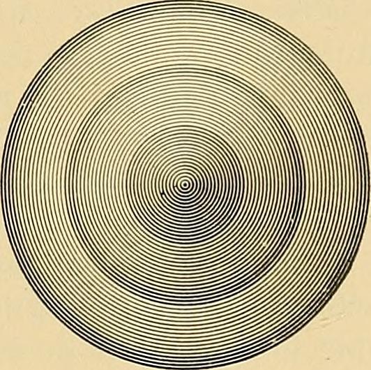 Shapes / Formes -