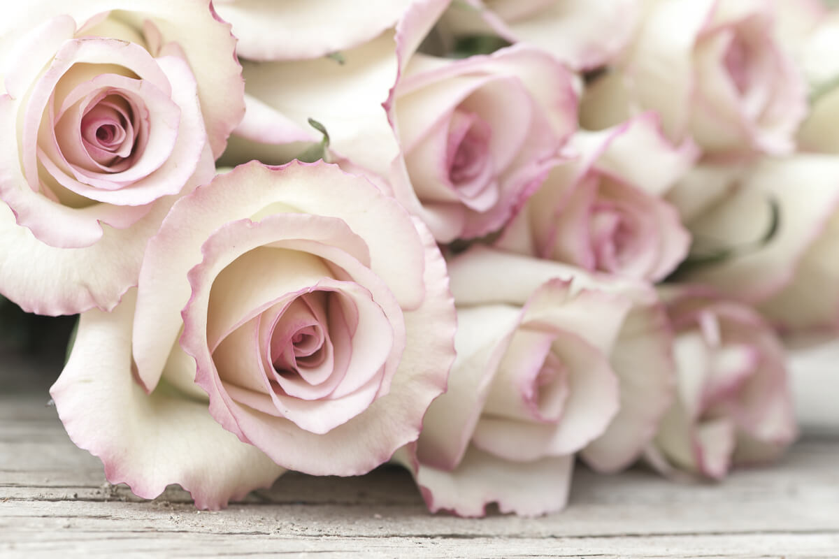 A Bouquet Of Beauty - Roses For Skin-care.jpeg