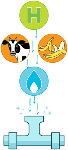 Renewable natural gas can be produced from many different types of waste.