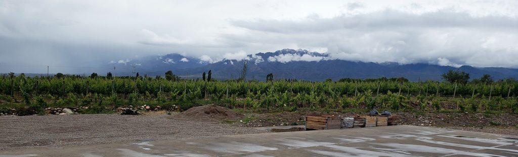 Mendoza-Vineyard-v2-1024x312.jpg