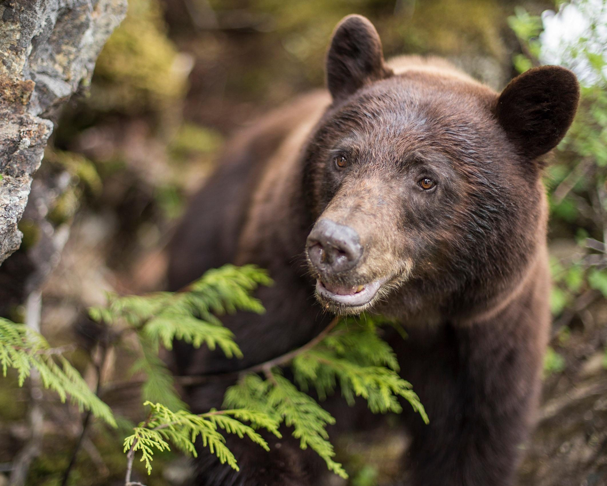 BearShallowDOF.jpg