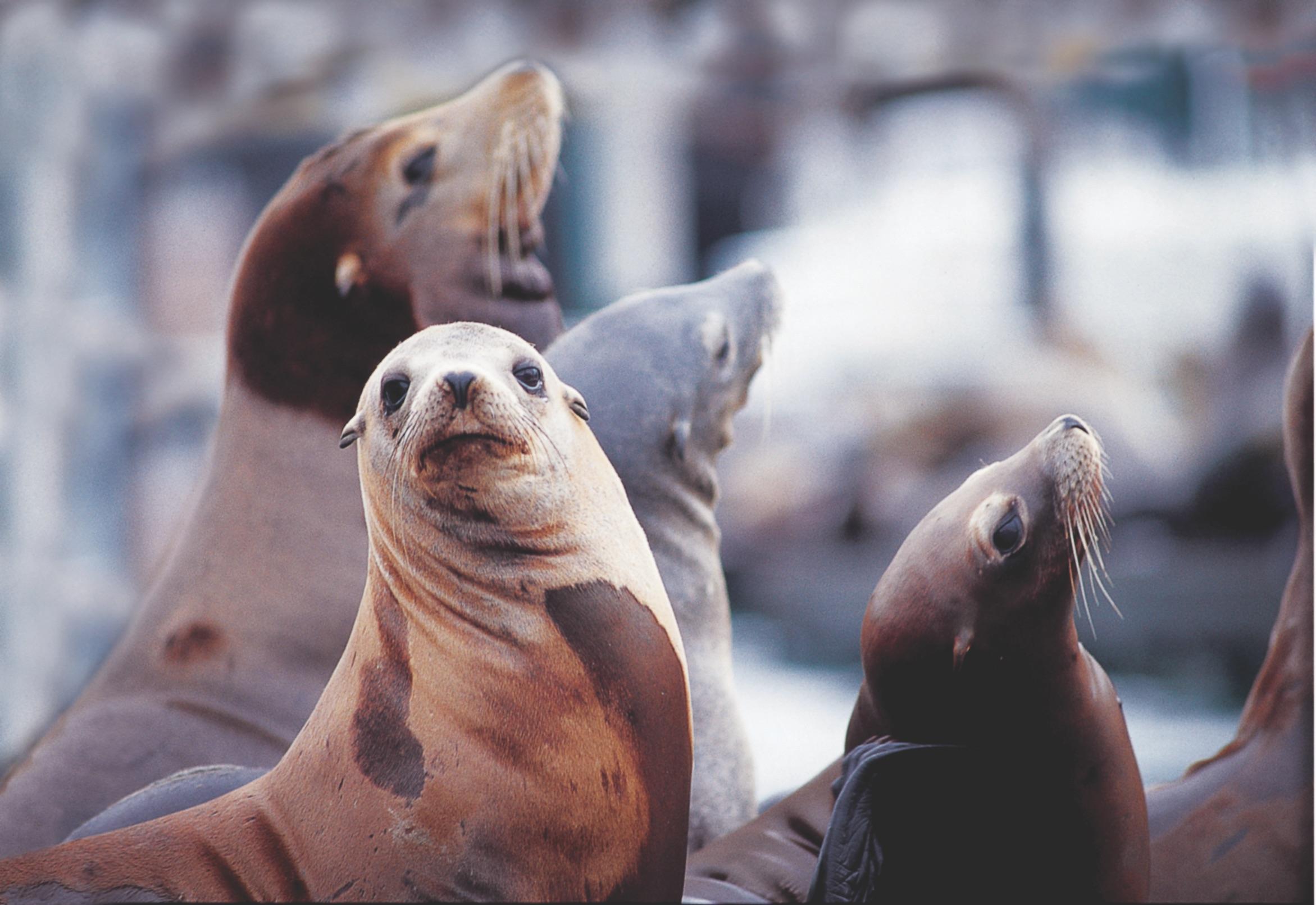 SeaLions.jpeg
