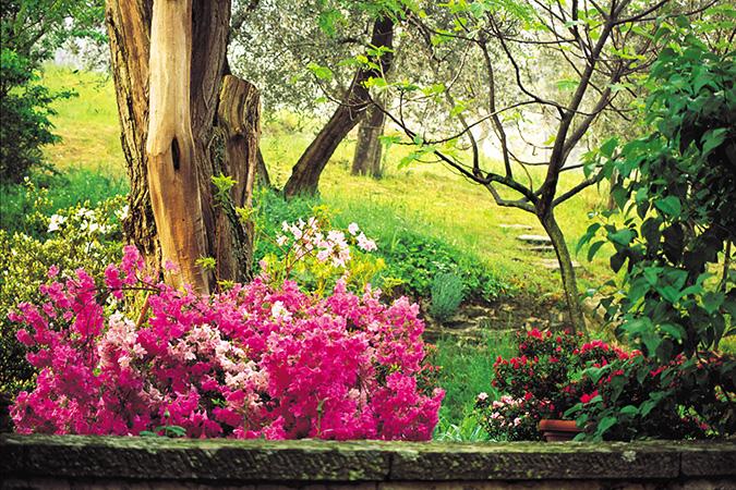 Garden-Fiesole-Italy.jpg