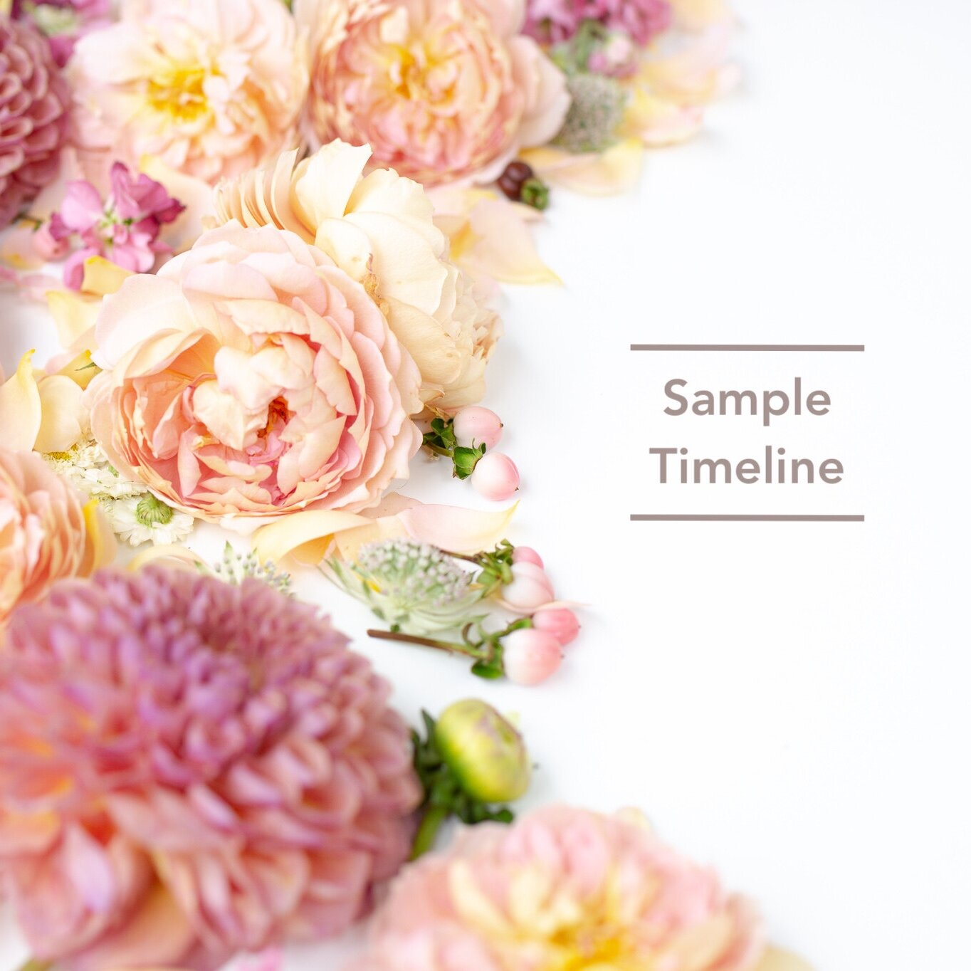 A customized timeline will be created for all Bloom Culture Clients. Here is an idea of what to expect. -