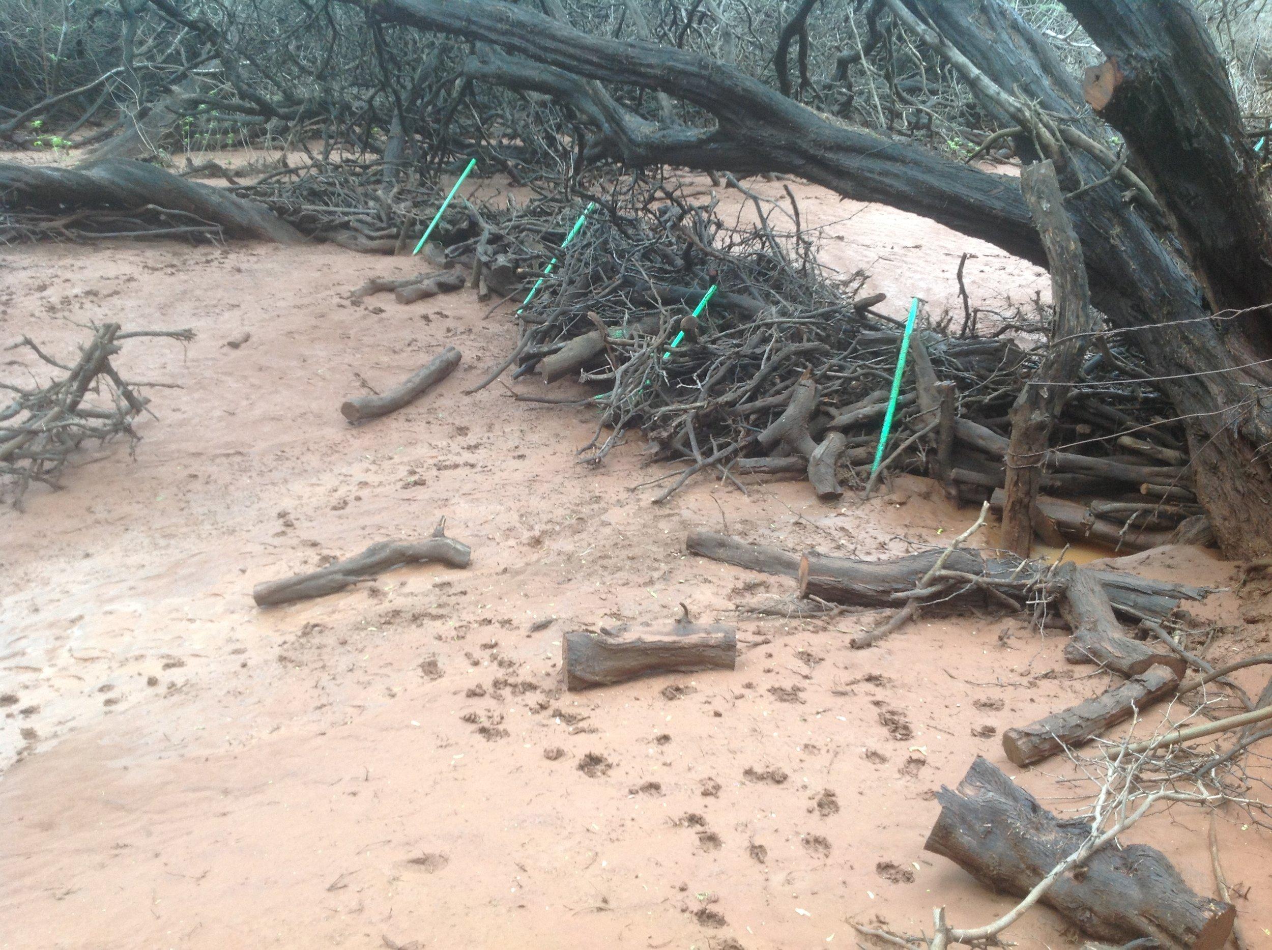Erosion monitoring on Lanaʻi