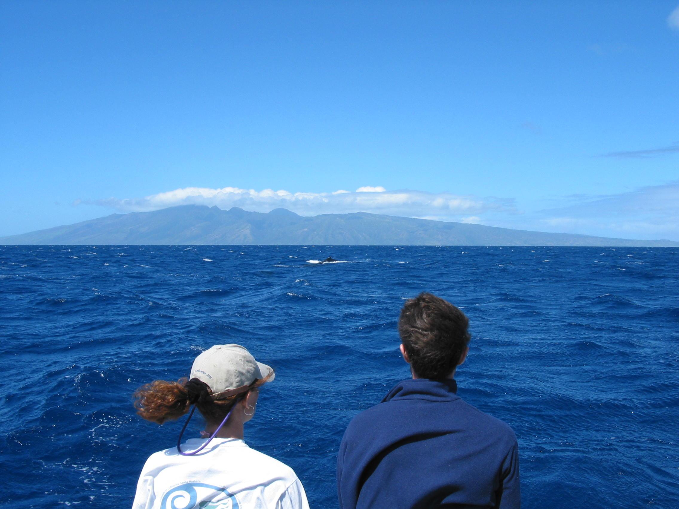 Coastal circulation off the west coast Maui