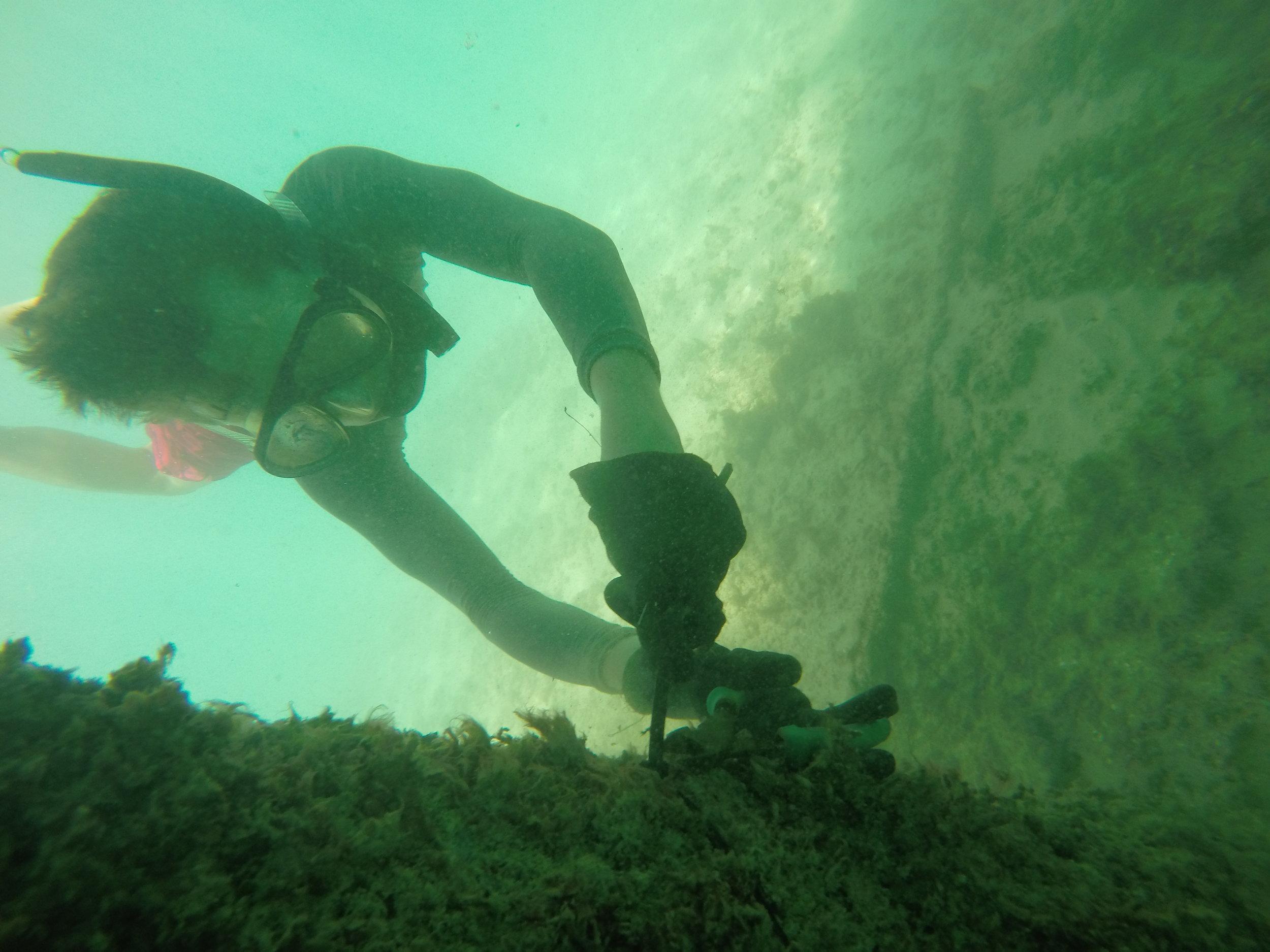 NSS_Margaret's nephew_under dock Hilton Hawaiian Village_GOPR0882.JPG