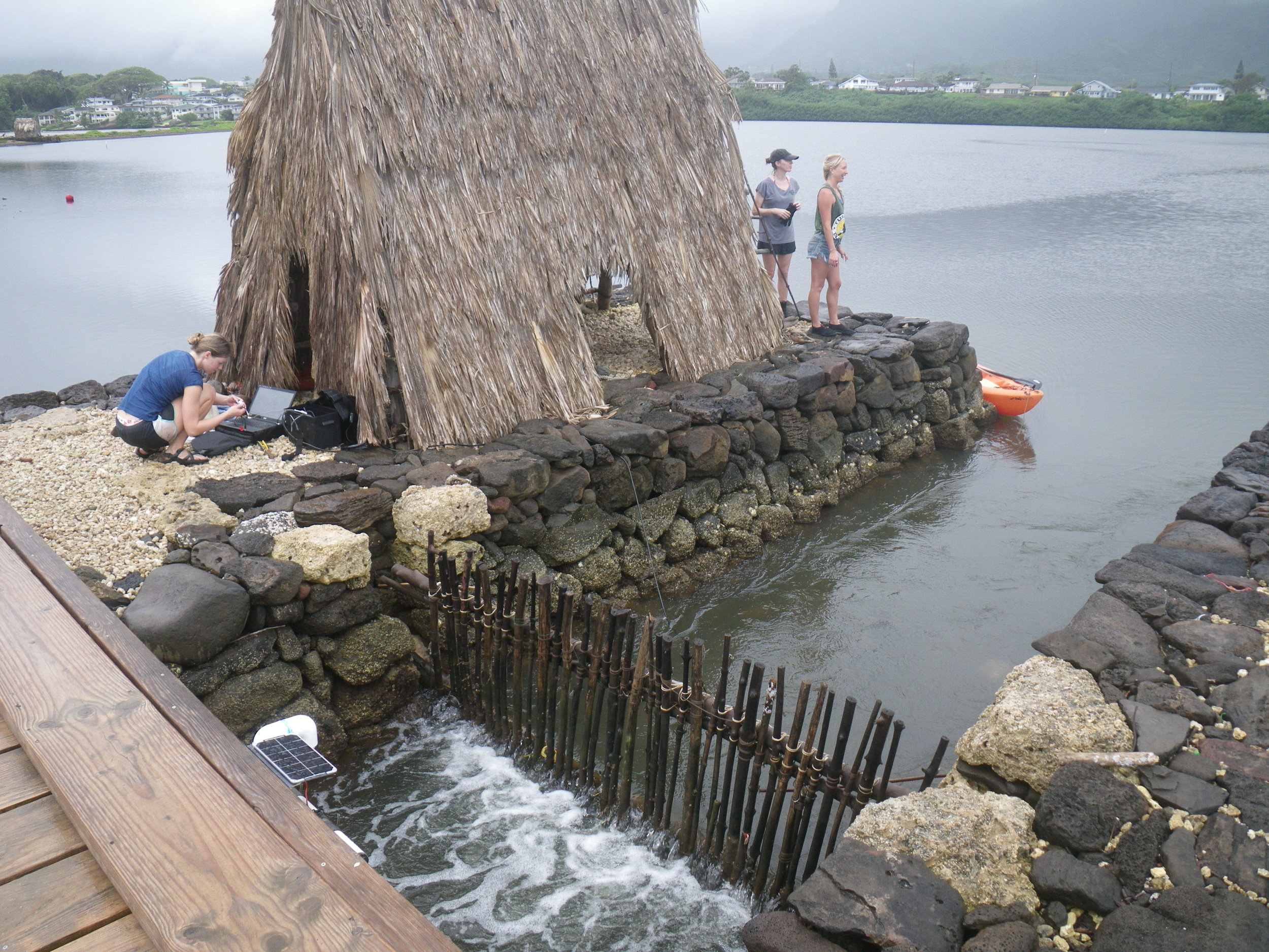Research being conducted by UH graduate students at Heʻeia Fishpond in Kāneʻohe. Photo Credit: Paula Moehlenkamp