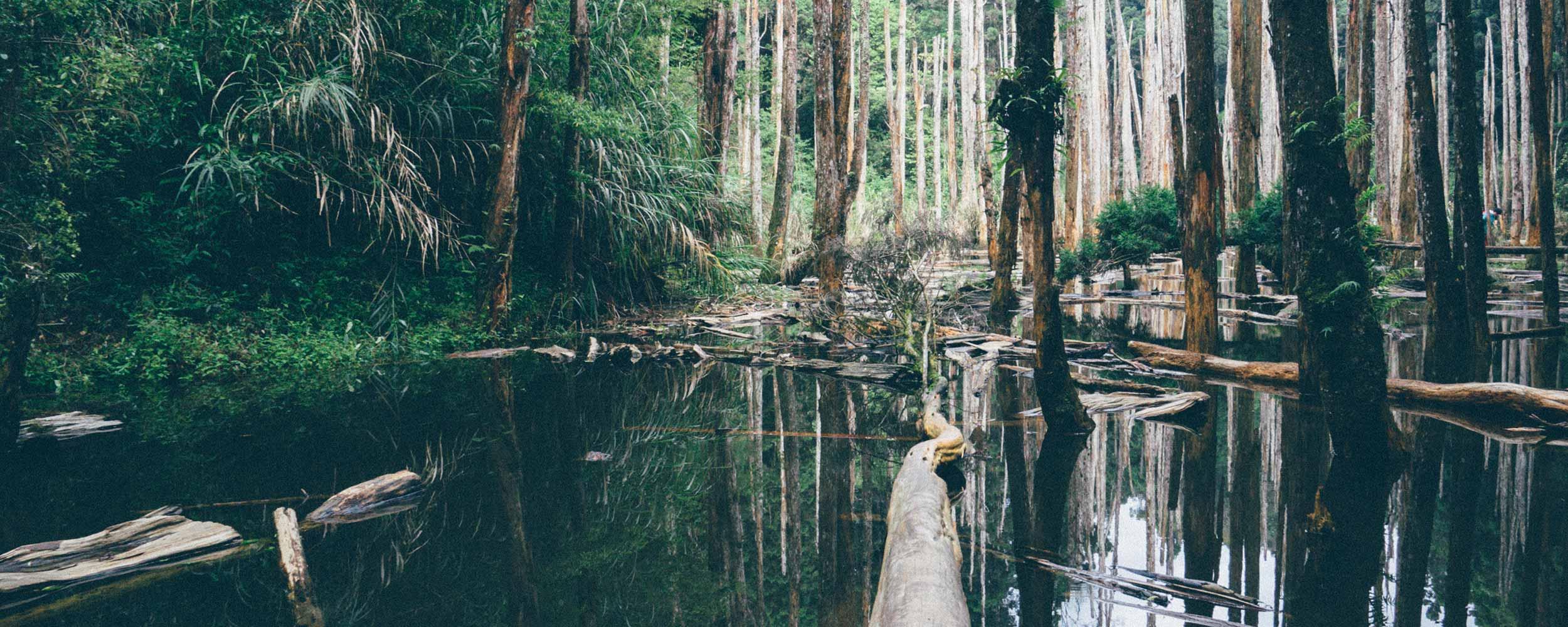 - Wetland Delineation