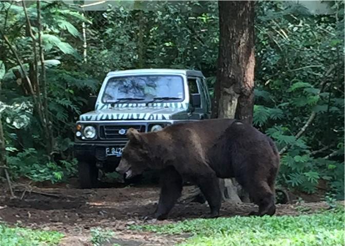 Arnold Bear.jpg
