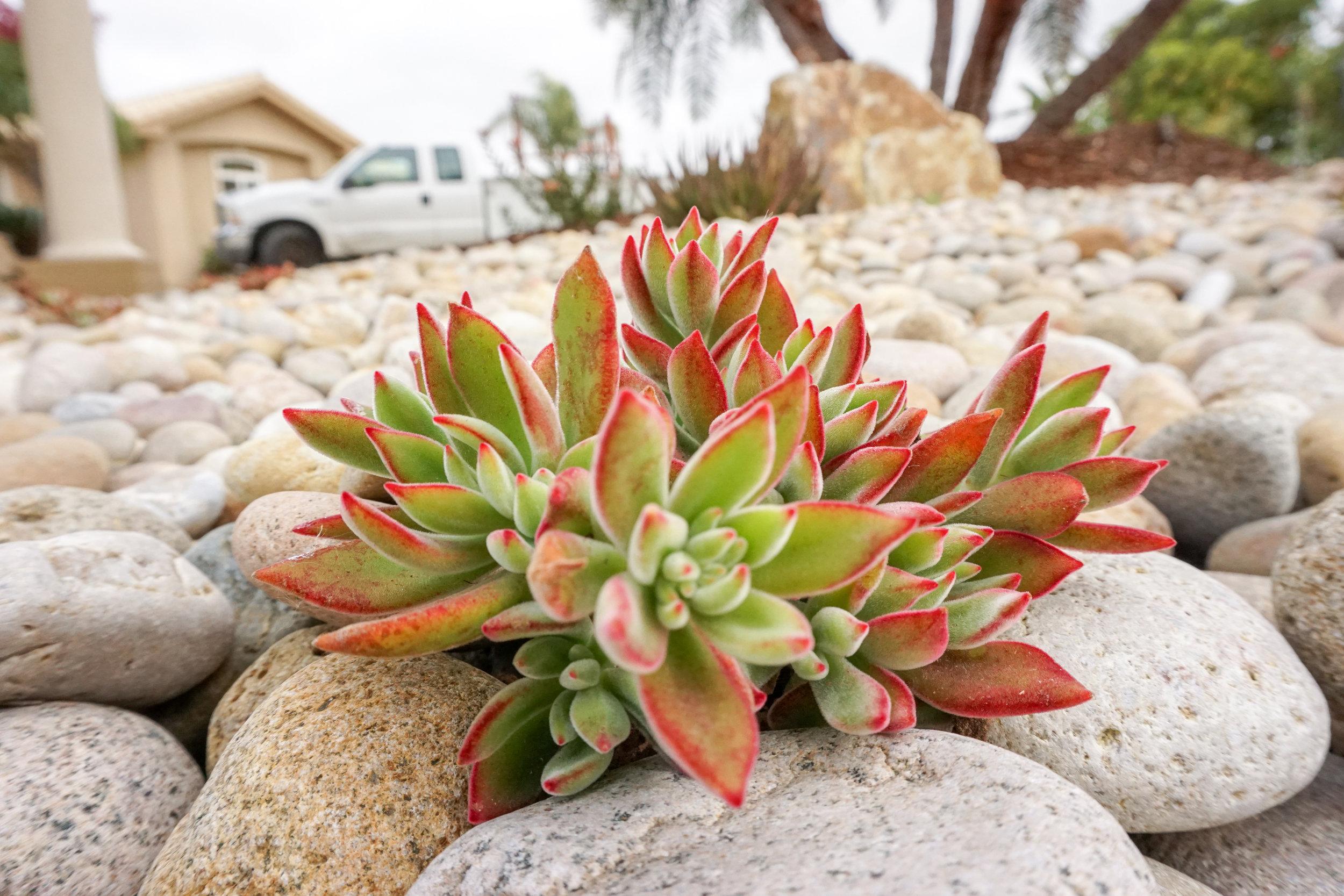 Succulent Scape