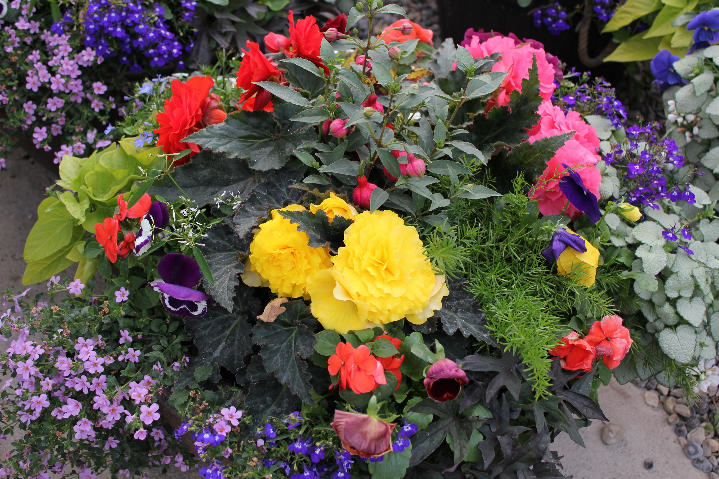 Plants & more - We specialize in custom planters and carry a large selection of ready made hanging baskets and containers. We also have a variety of plants, outdoor pots, garden decor, soil and fertilizers.