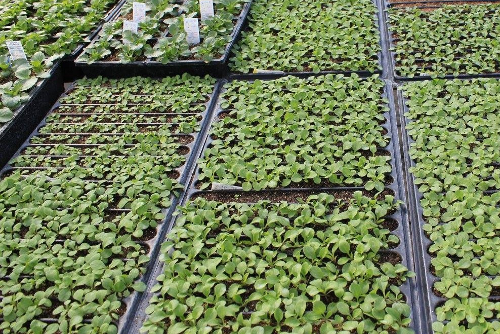 HARDY PLANTS - 90% of our plants are grown in our nursery from seed, cutting or bareroot.
