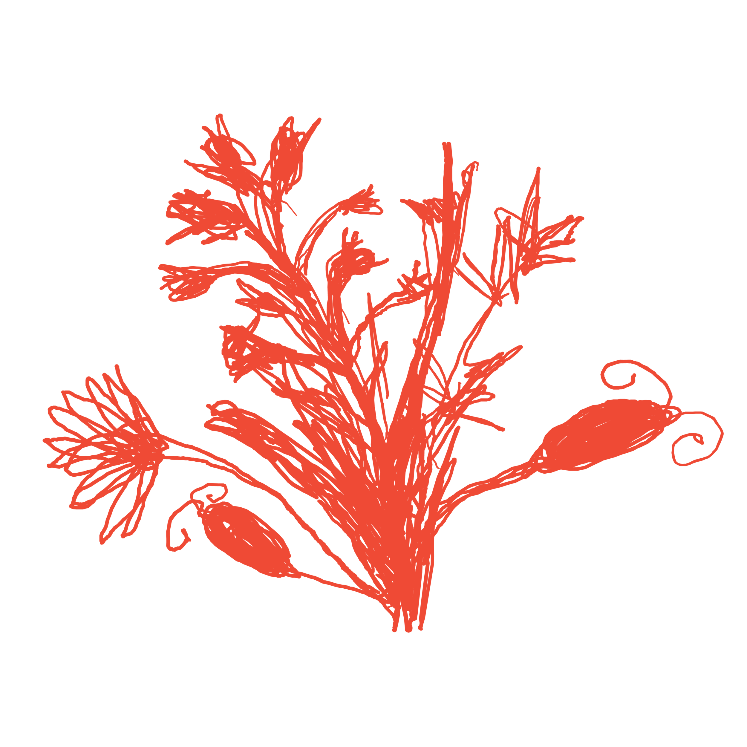themompodcastlogoflower_red.png