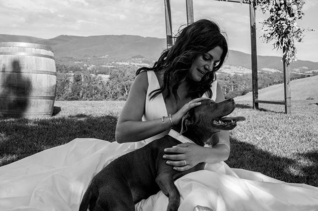 No ceremony is complete without a moment with the fur baby. From the wonderful Cheryl & Ryan's beautiful wedding at @riverstoneestate . . . . . . . . #weddingdress #whitewedding #wedding #melbournewedding #weddingphotography #winery #melbournephotography #melbournephotographer #winterwedding