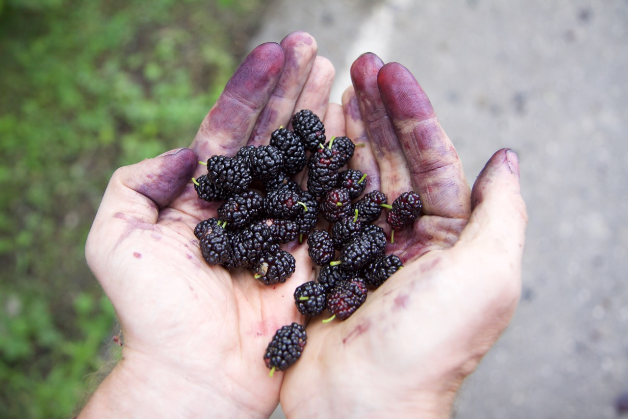 bosenberry hands.jpg