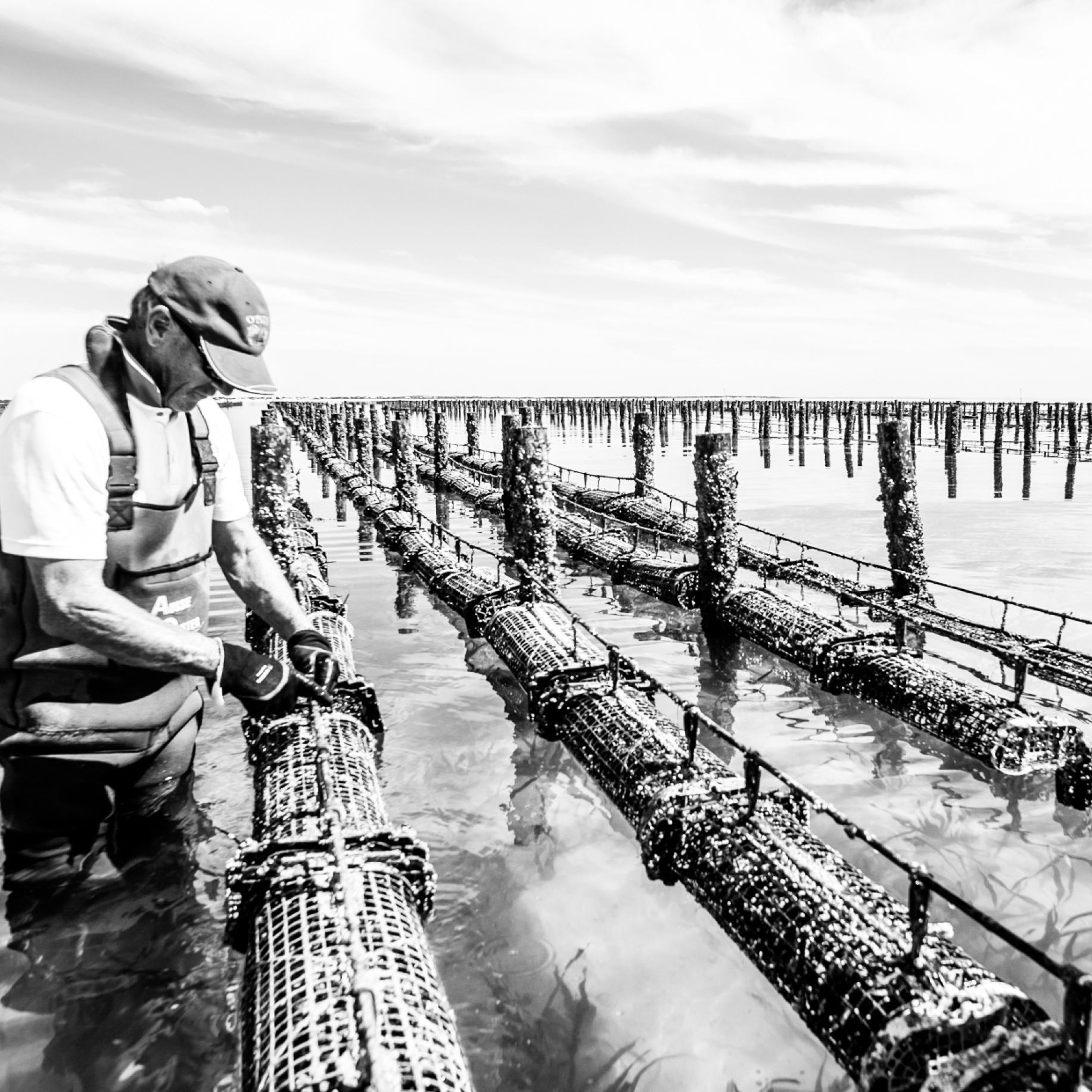 Mooka Oysters Photography