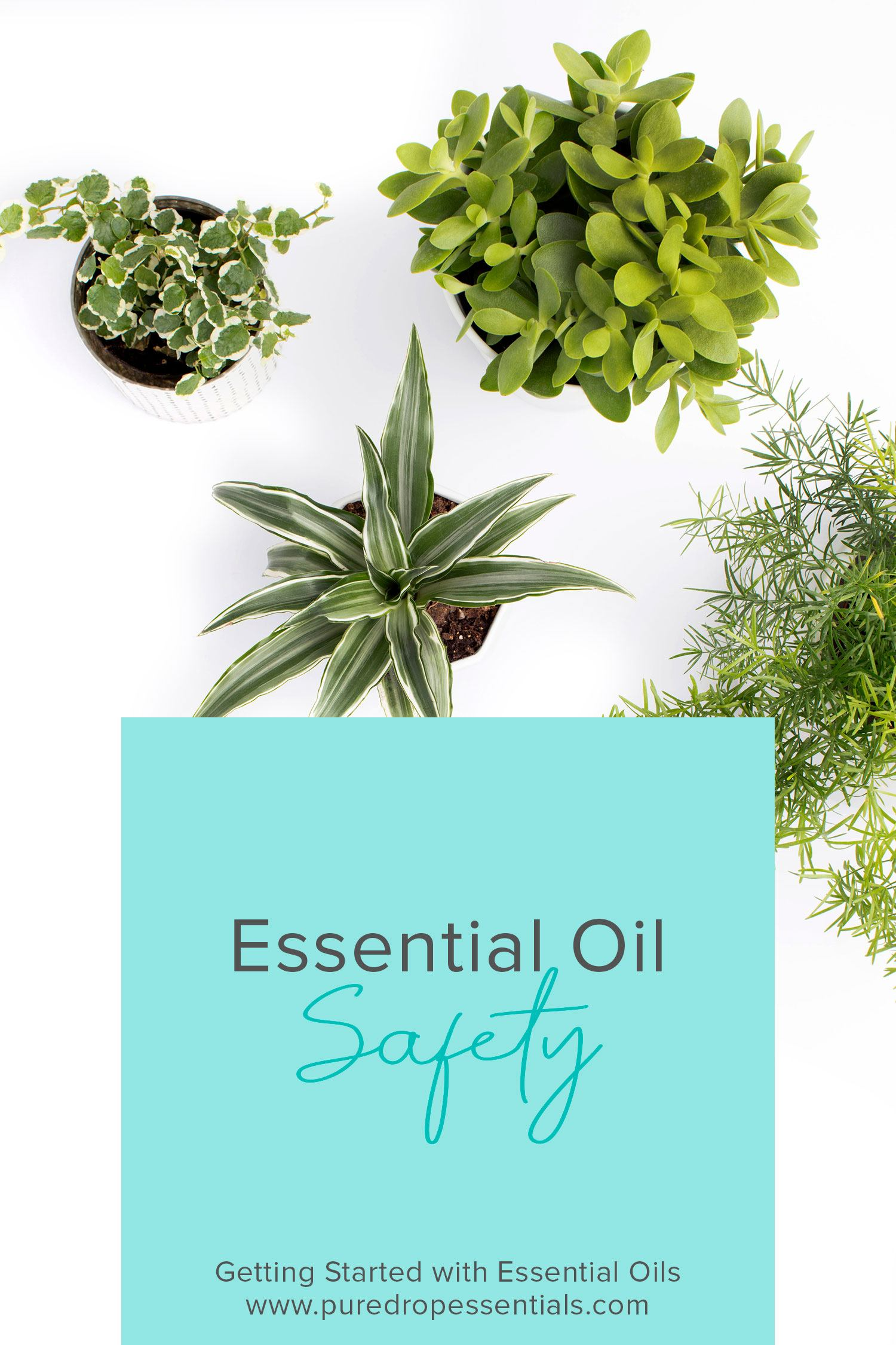 Although essential oils are safe to use, as with anything, too much of a good things can be bad. Click through to find out about the precautions to take when using essential oils to ensure the safe use for your family ! www.puredropessentials.com