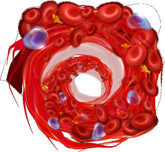 visualizzazione flusso sanguigno