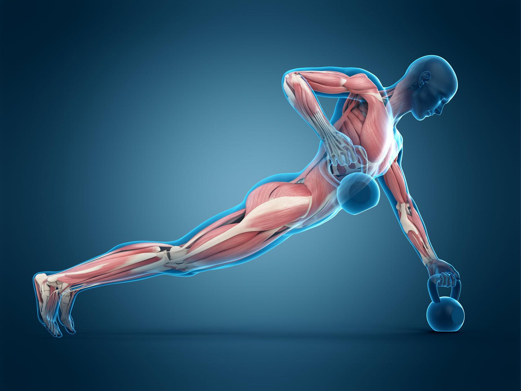 Rigenerazione cellulare del muscolo scheletrico nello sportivo