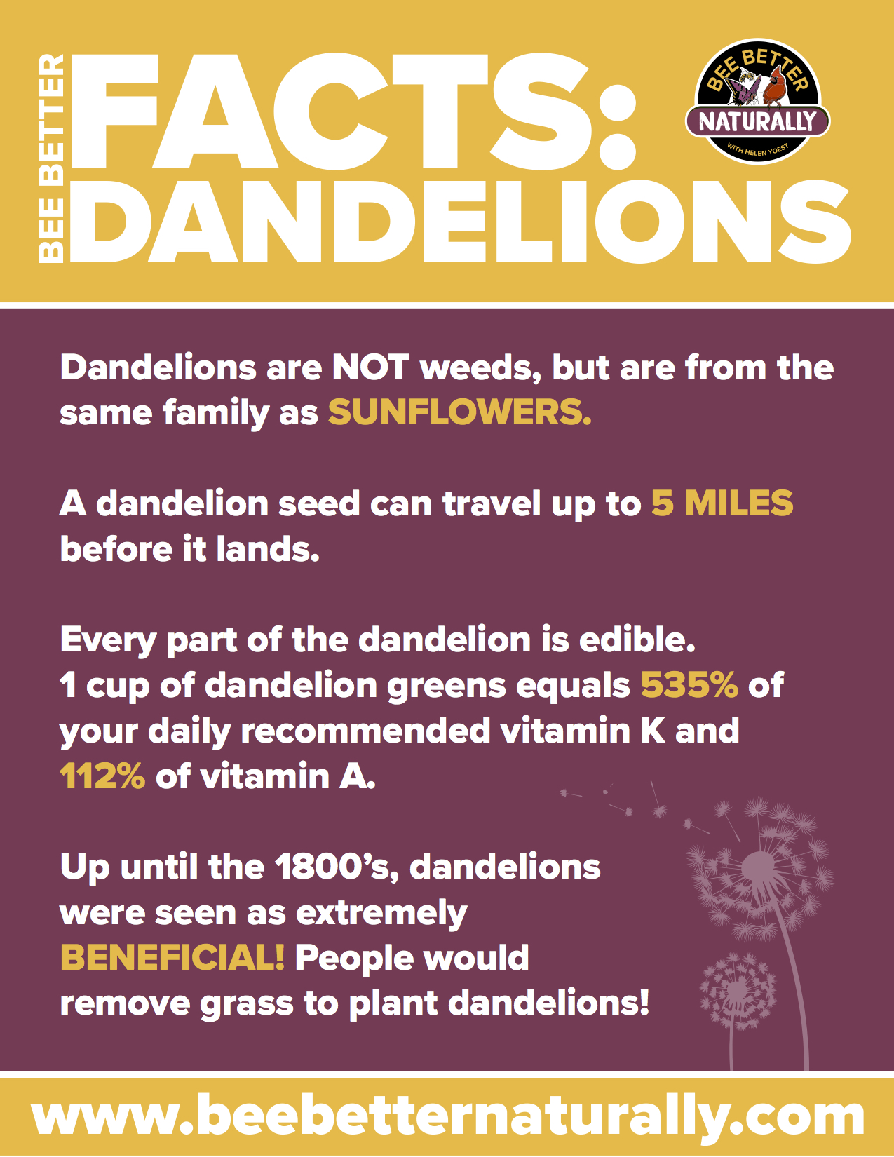 dandelion downloadable flyer.jpg