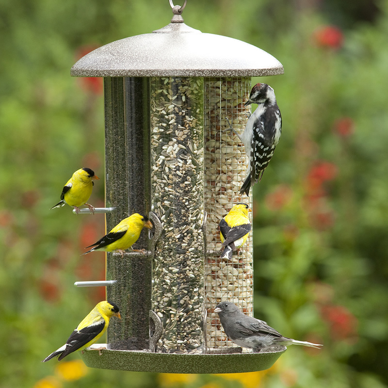 Tube Feeder  House, purple finches, American goldfinches, sparrows, chickadees, nuthatches, and juncos all favor Nyger seed.