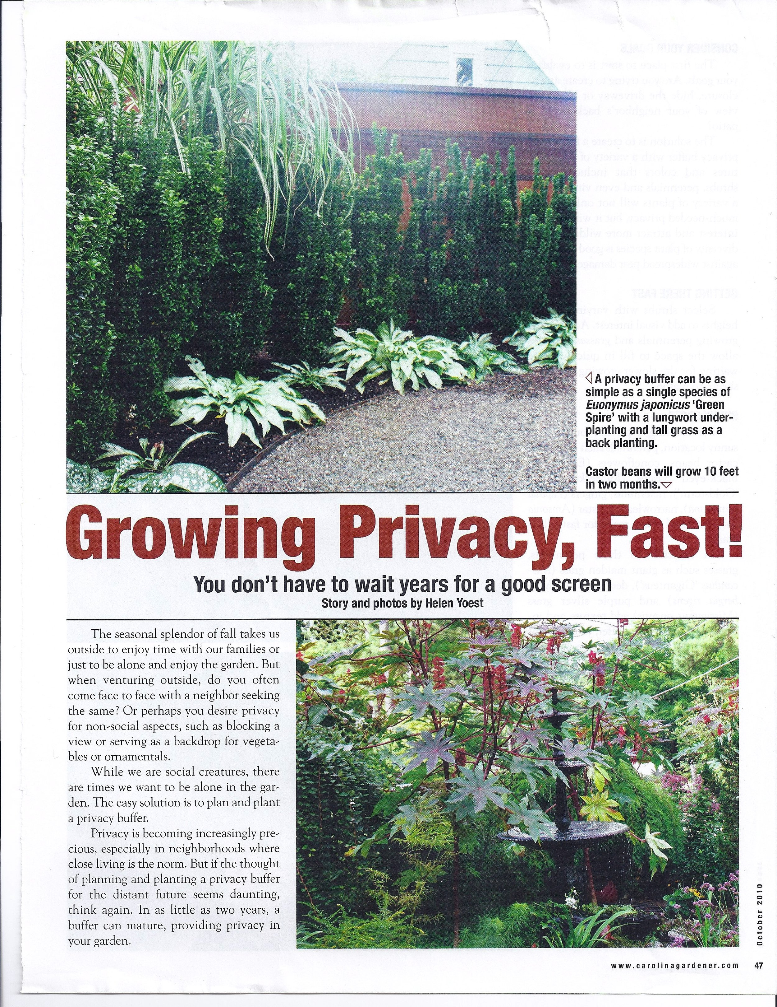 How-To Grow Privacy Fast