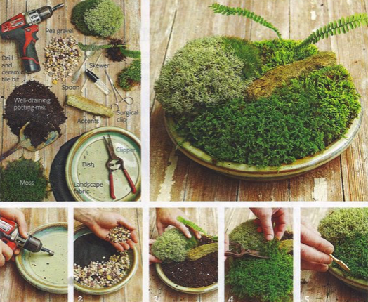 How-To Make a Moss Dish
