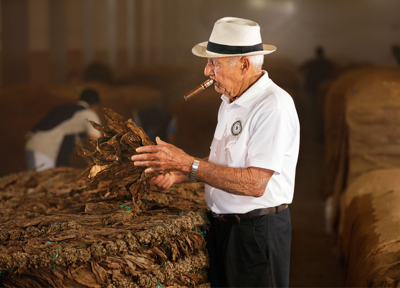 Inspecting Tobacco During Fermentation