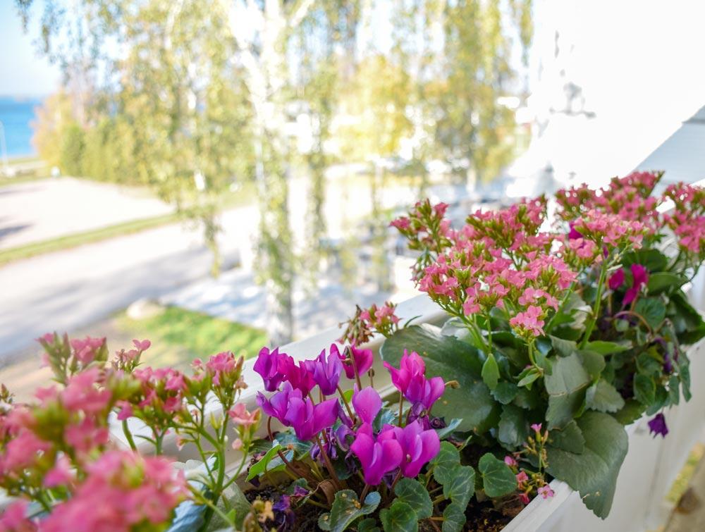 Vacker utsikt från Husholmen