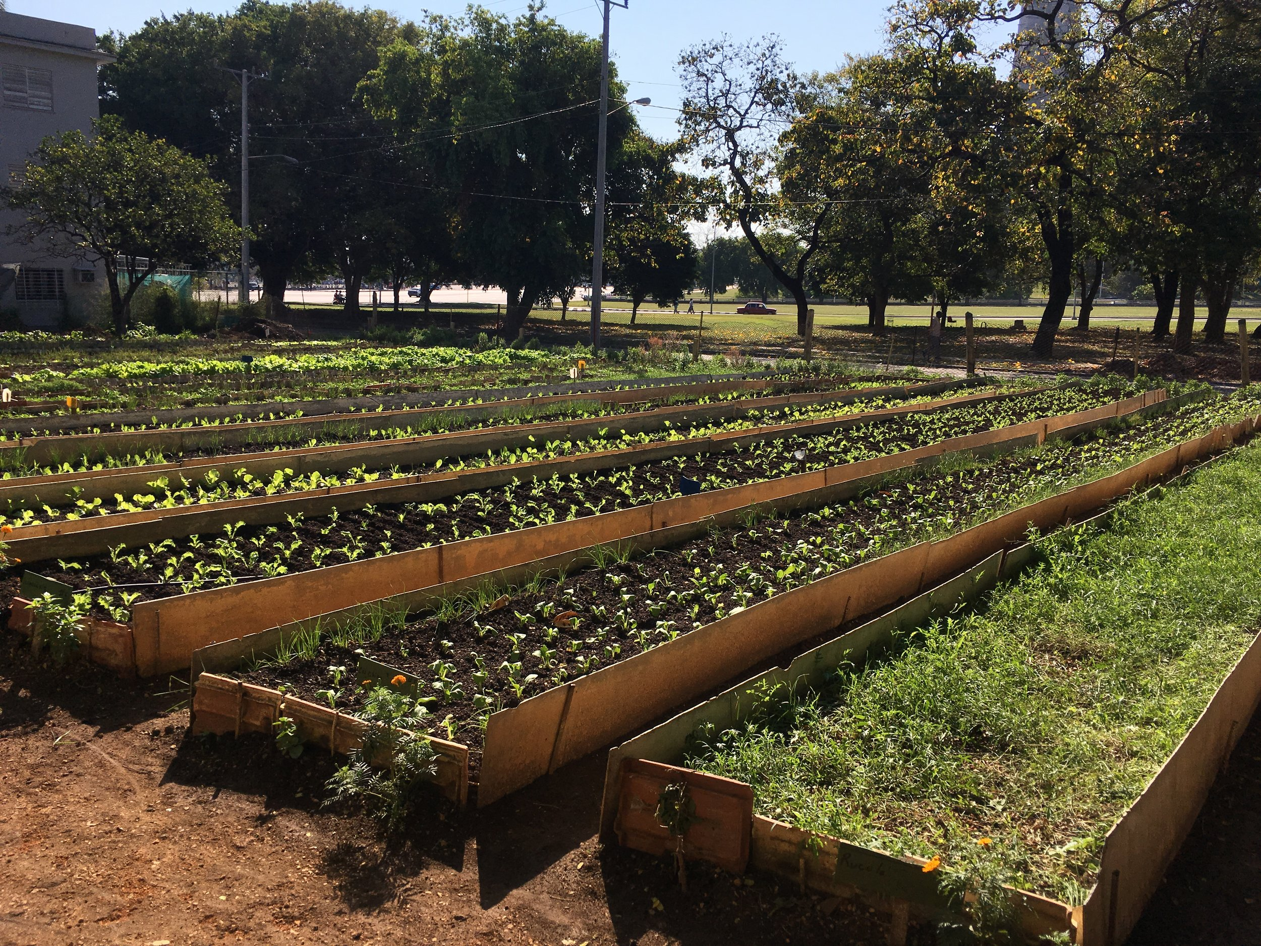 Urban farm next to Havana's Plaza de la Revolución Photo: Agnes Czajka