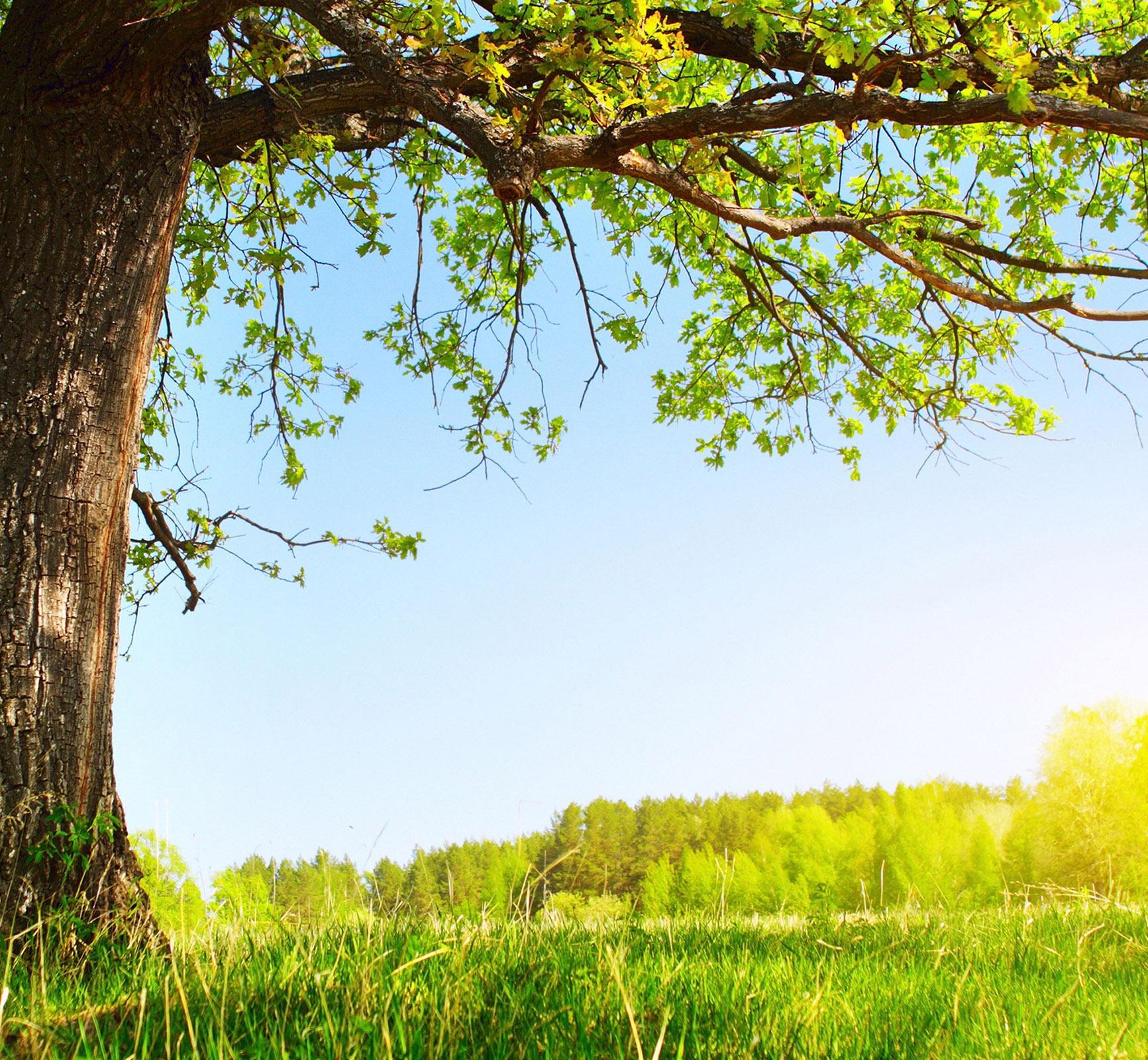 Praying Tree.jpg