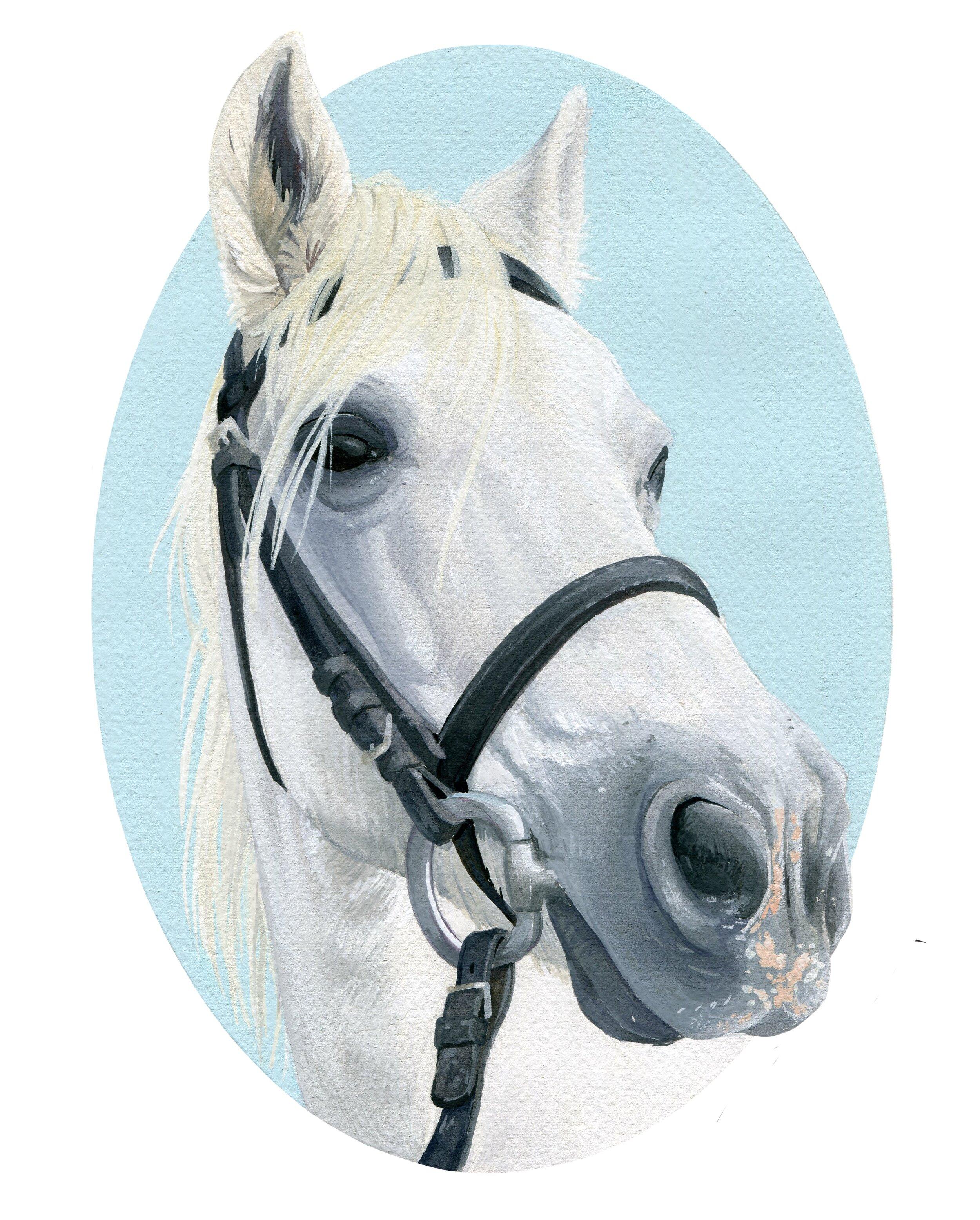 HorseSep19_48bitcolor011.jpg