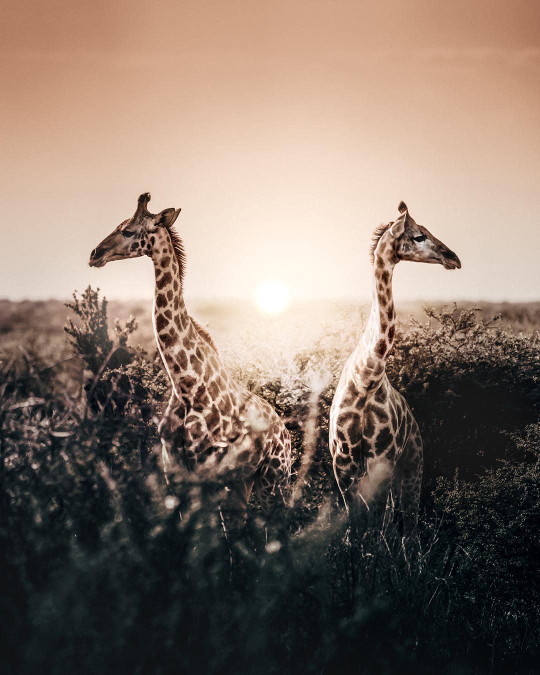 giraffe (1 av 1).jpg