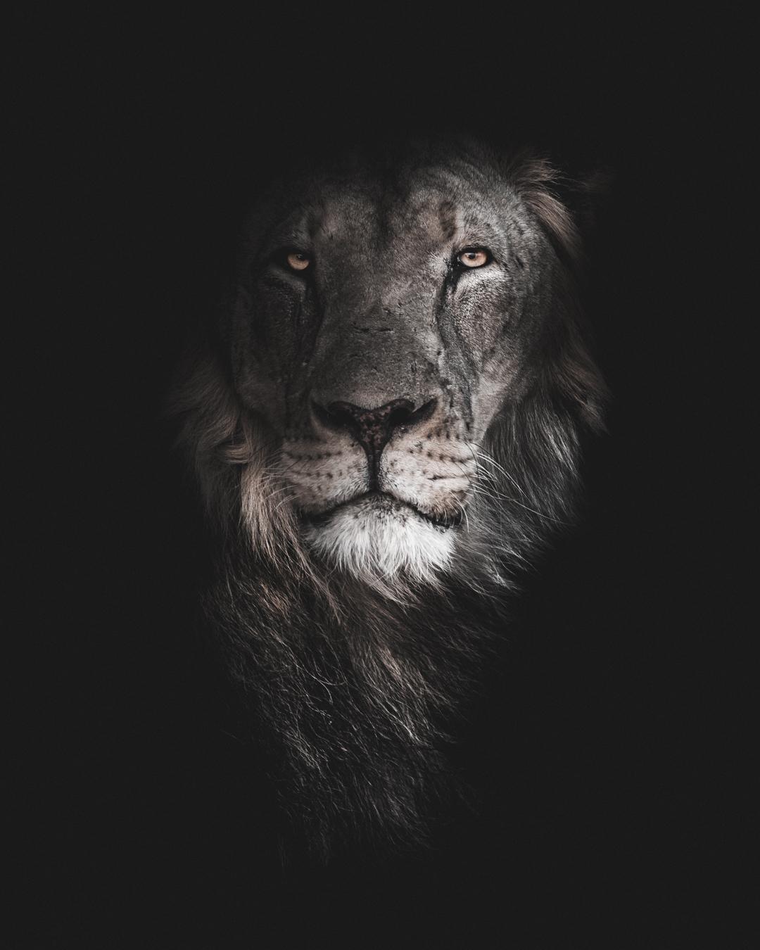 king (1 av 1).jpg