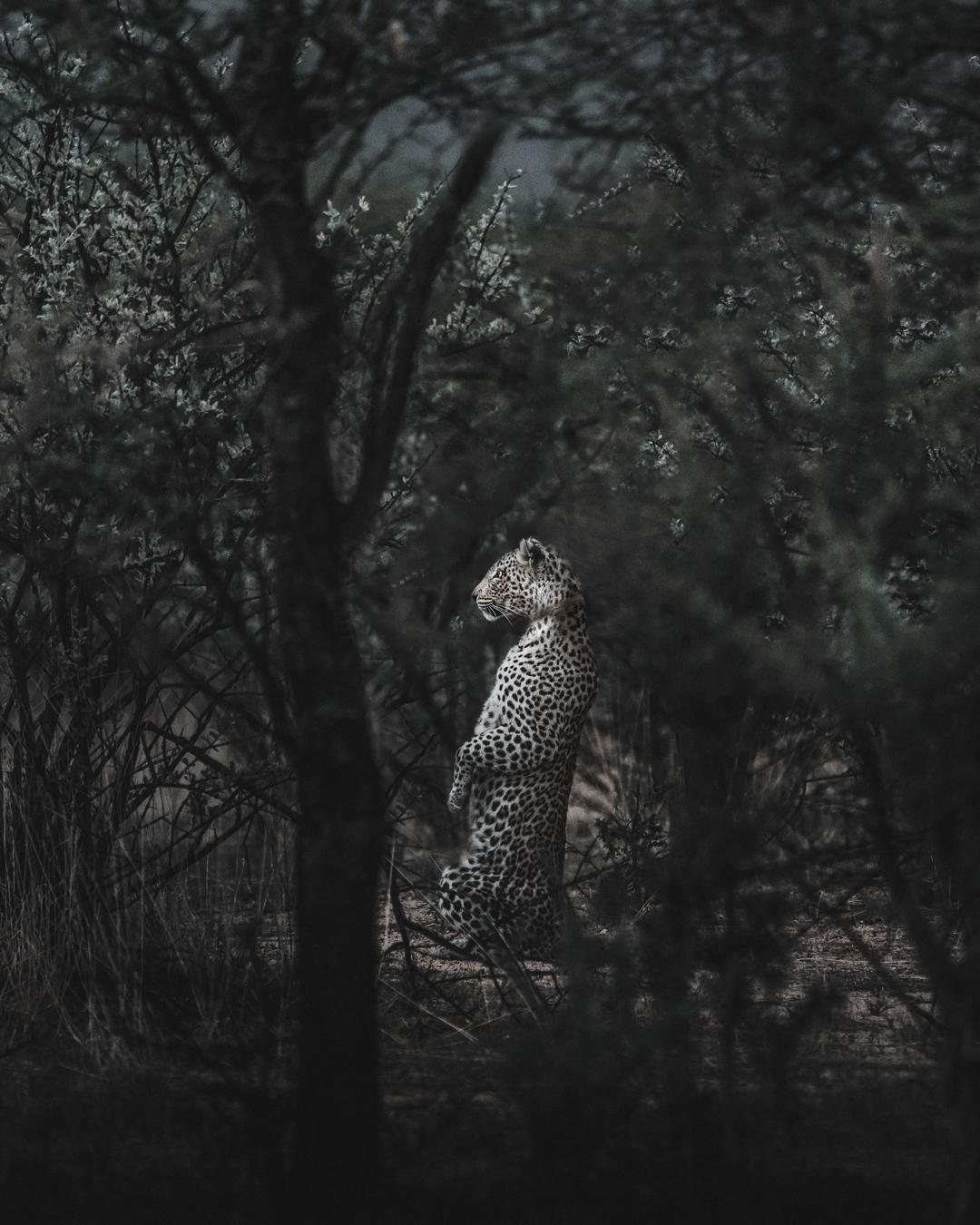 leopard (1 av 1).jpg