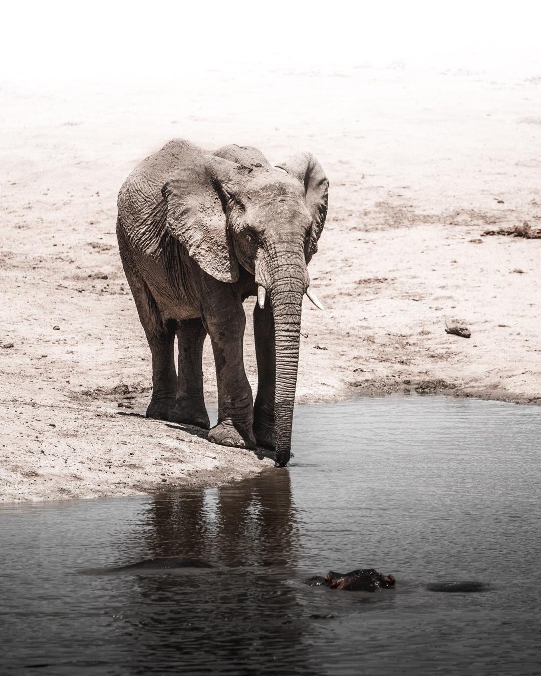 elephant_drinkning (1 av 1).jpg