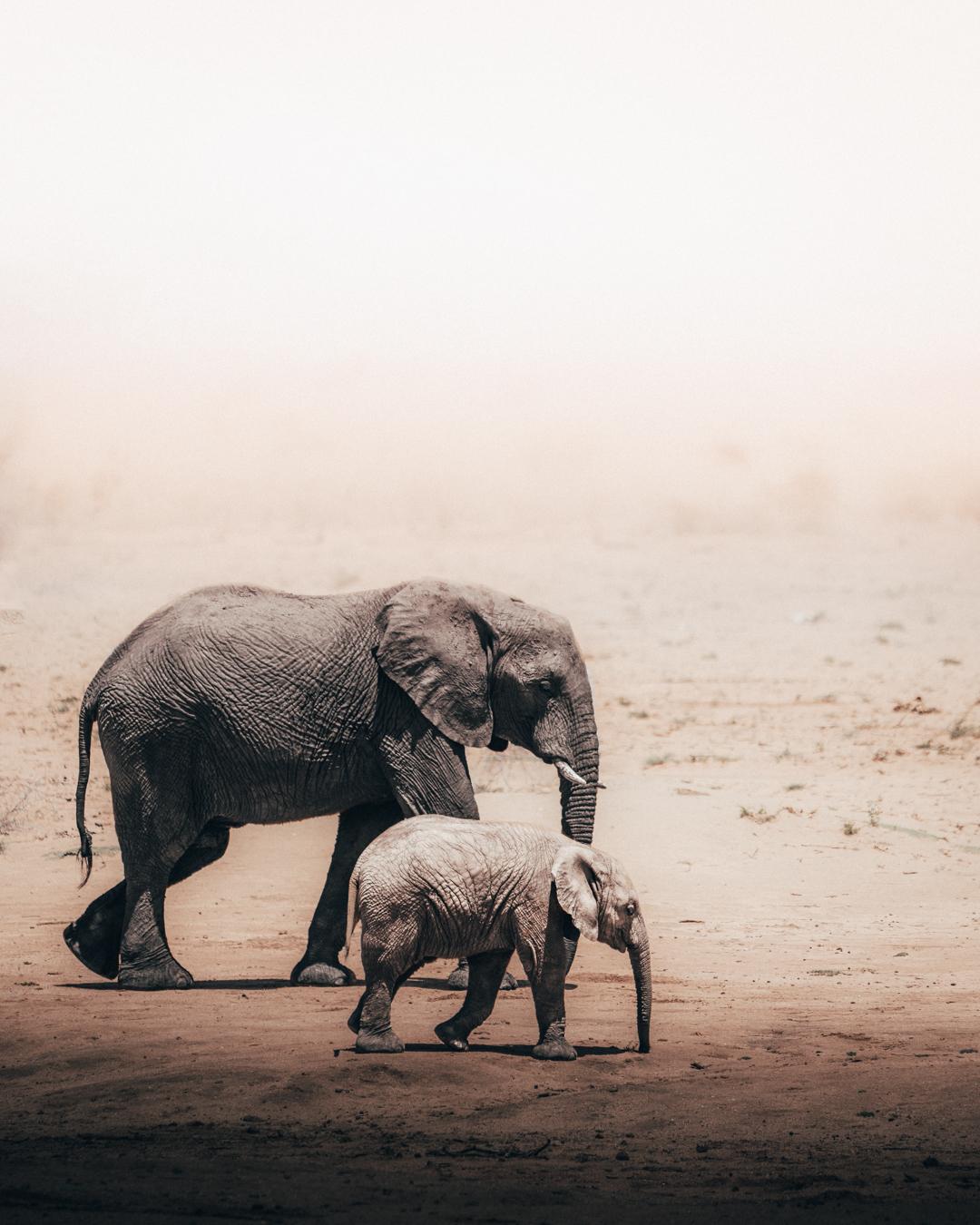 elephant_family (1 av 1).jpg
