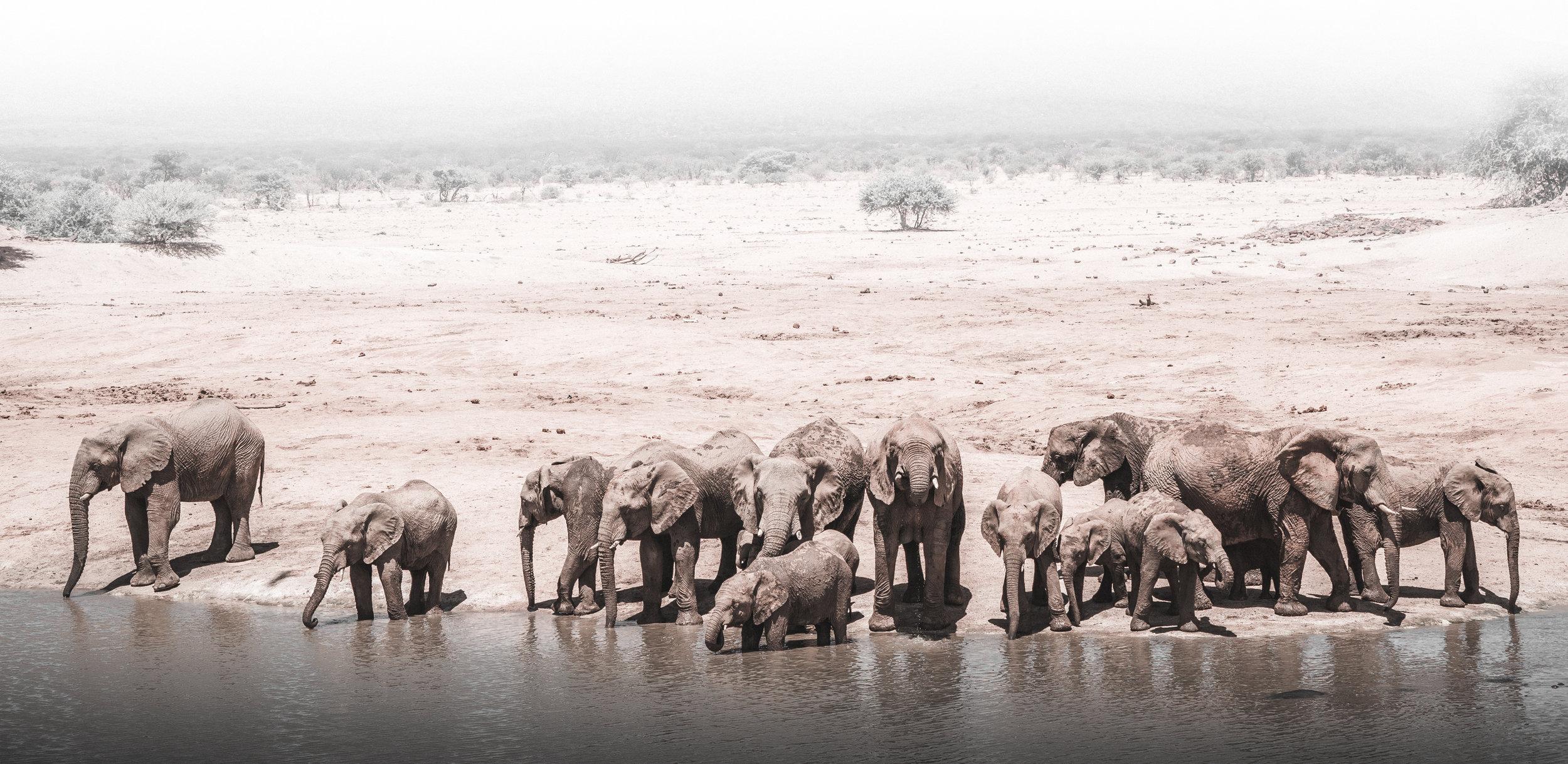 elephants (1 av 1).jpg