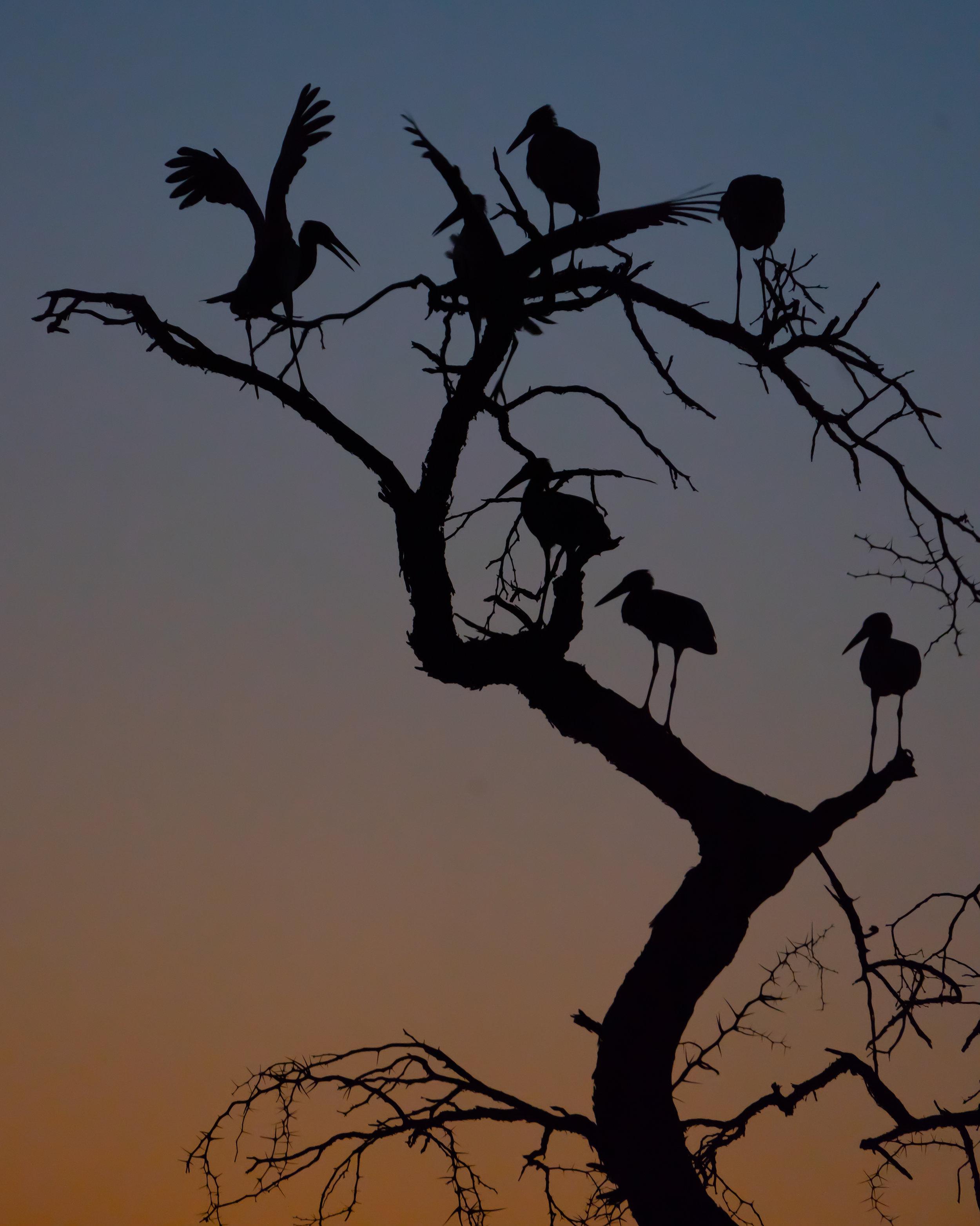 birds (1 av 1).jpg
