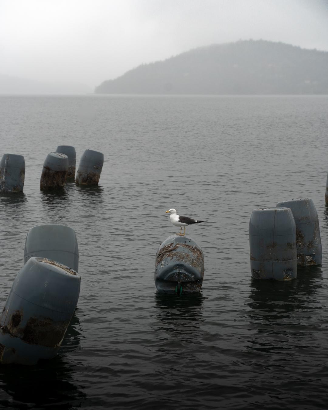 musslor ljungskile