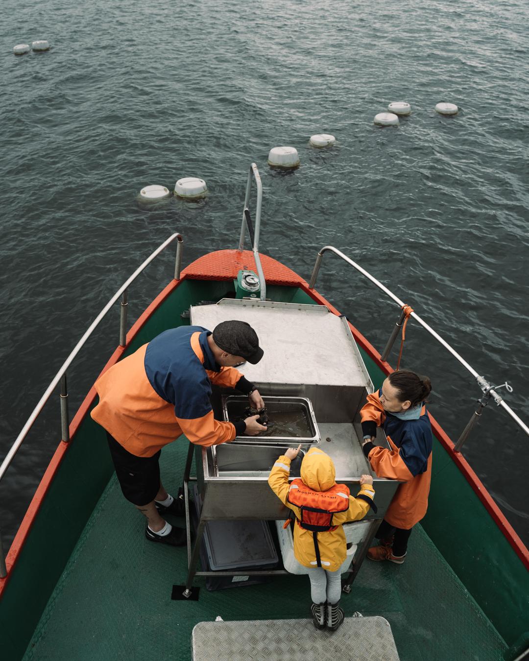 musselskörd
