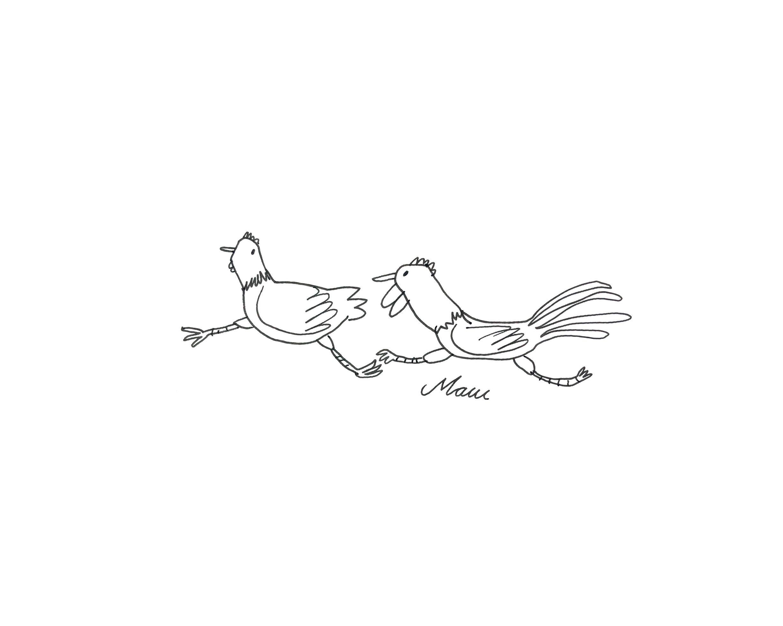 christinaleist_wild-chicken.JPG