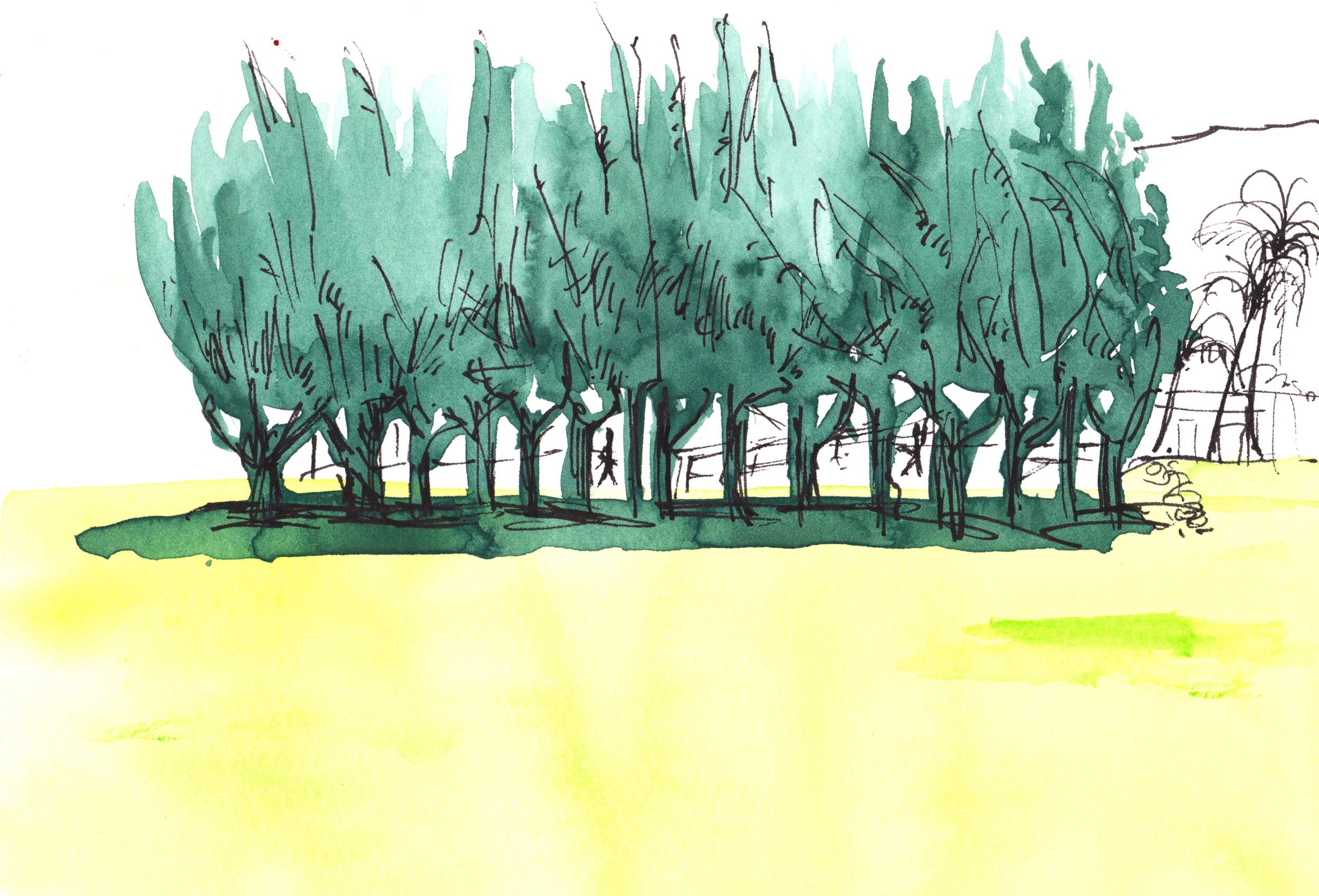 maui_greenlandscape-4.jpg