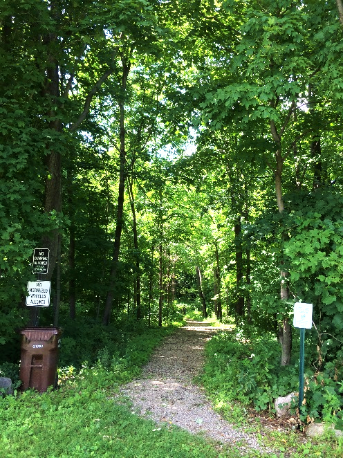 Picture of trees and a trail