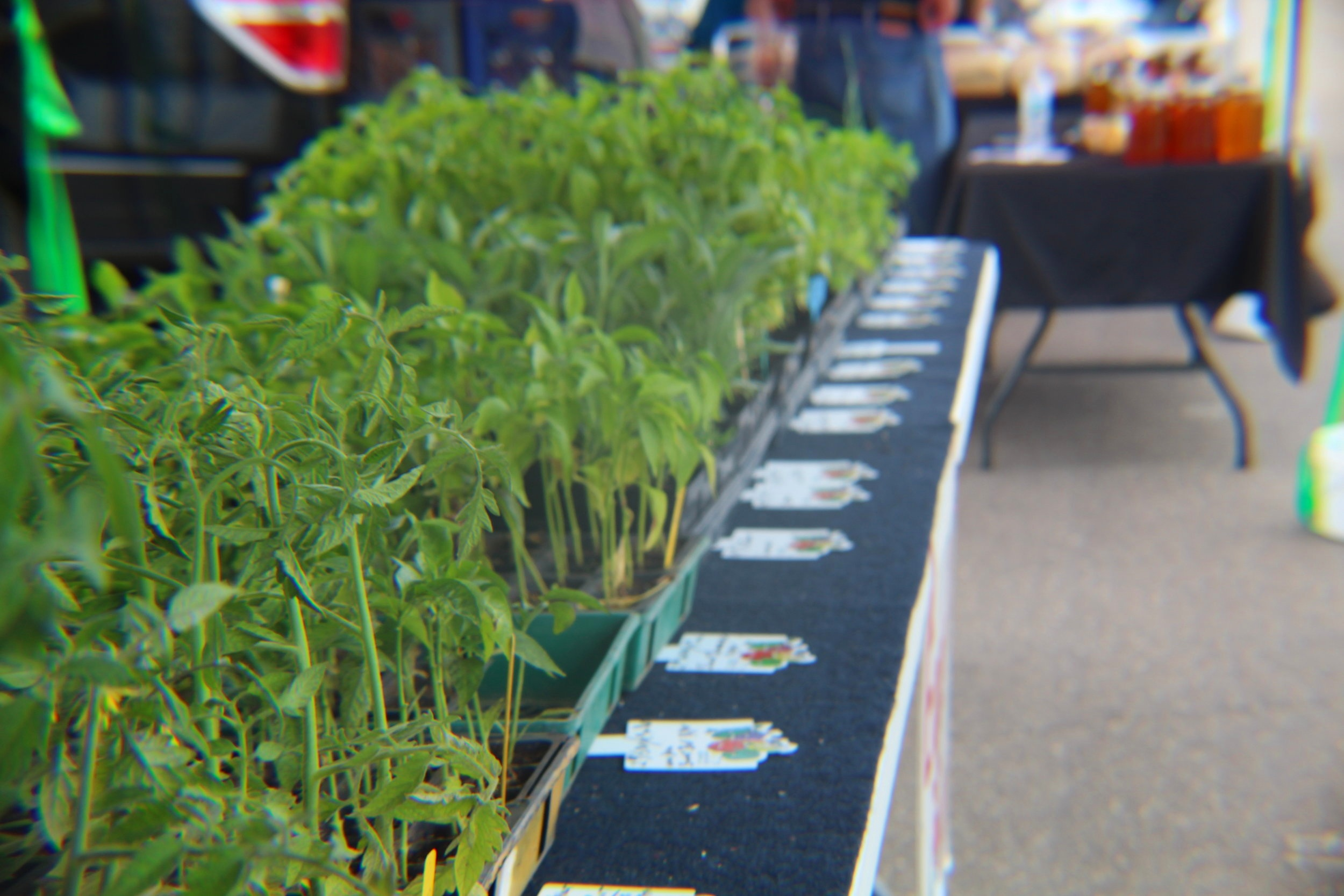 Picture of plants at Rogers Farmers Market