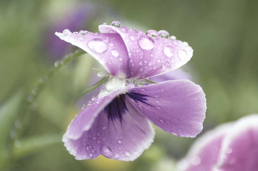 Organic_Vineyard_Plant_LIfe_Venturi_Schulze.jpg